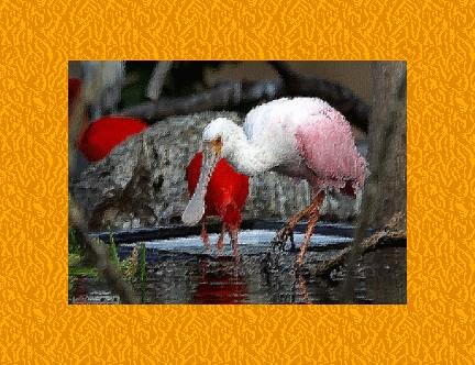 uccelli-a-valencia.jpg