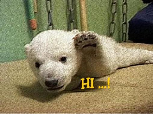 hi.jpg