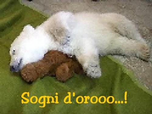 sogni-doro-1__.jpg