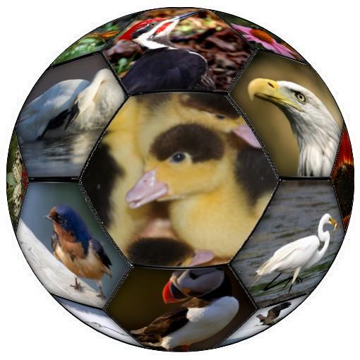 ballonfoot-uccelli-1.jpg