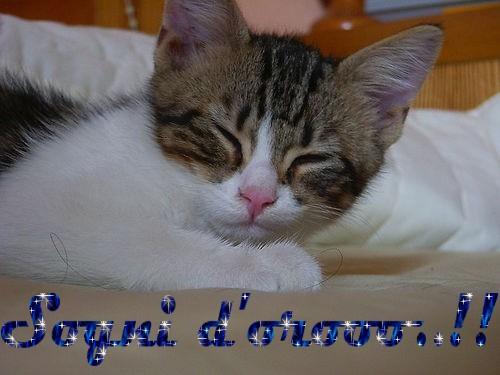 sogni-doro-2.jpg