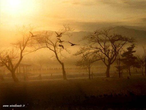 foto_autunno_329.jpg