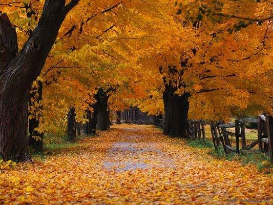foto_autunno_335.jpg