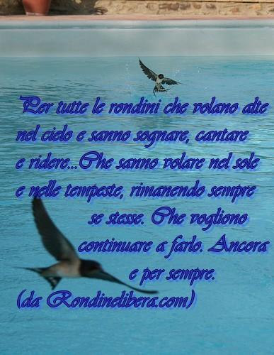 foto rondini