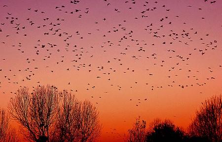 quando-gli-uccelli-ridotta.jpg