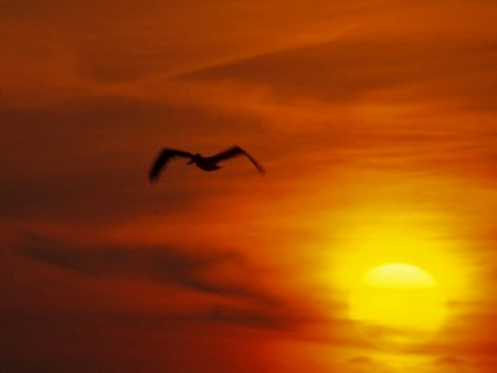 sunset-ridotta.jpg