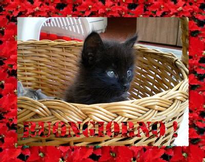 buongiorno-gattino-ridotta.jpg