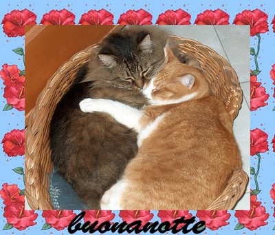 notte-gattini-ridotta.jpg