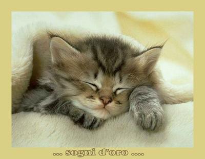 sogni-gattino-tenero-ridotta.jpg