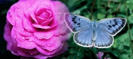 copia-3-di-farfallarosa.jpg