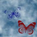 farfalle-in-cielo.png