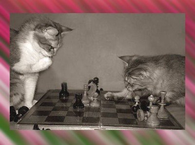 gatti-e-scacchi.jpg