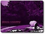 notte-viola