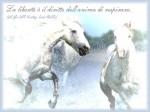cavalli-bianchi-2-cartolina