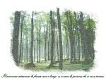 il-cammino-attraverso-la-foresta-cartolina