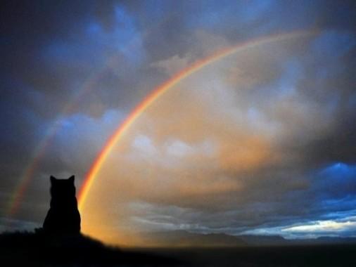 gatto-e-arcobaleno-3-ridotto1