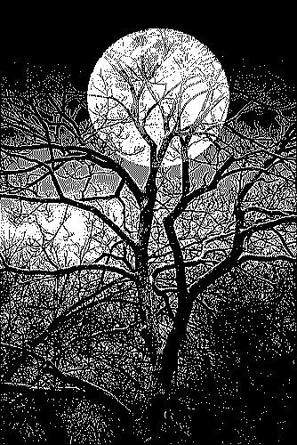 ombre-di-alberi-2