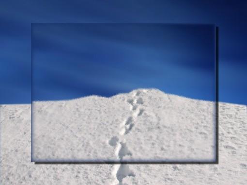orme-sulla-neve
