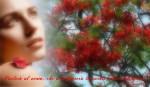 card-8-marzo-rossa