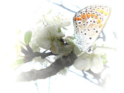 susino-in-fiore