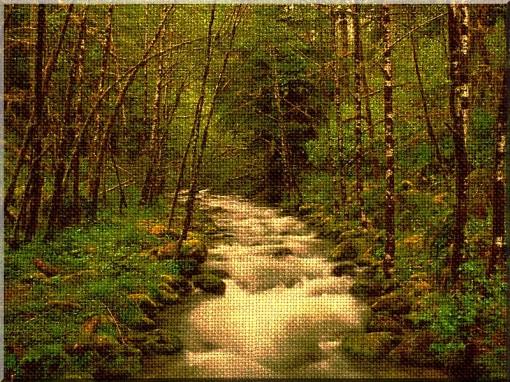 foresta-02-su-canapa
