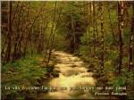 foresta-su-canapa-cartolina