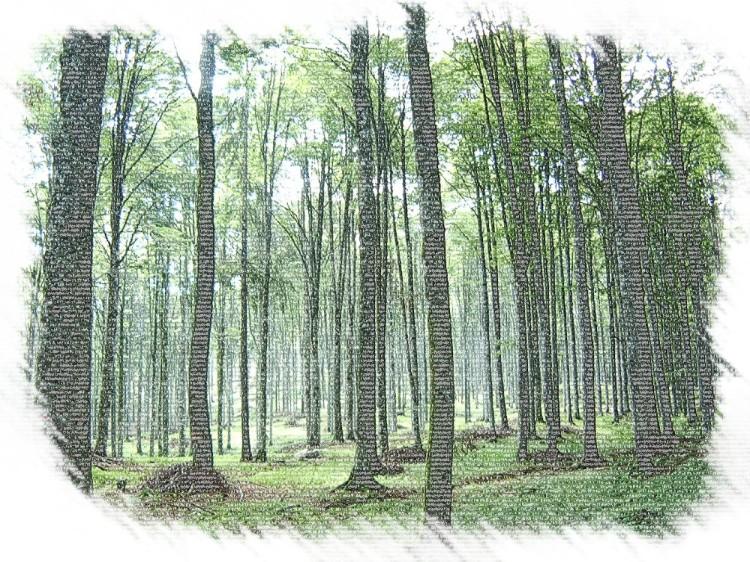 foresta2-matita-colorata