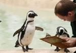 knuttz_ueba_188791-pinguini