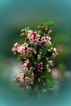 questi-fiori-1