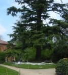 albero-delle-tazze-ridot-2