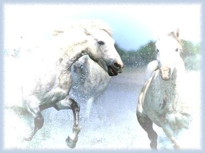 cavalli-bianchi-2