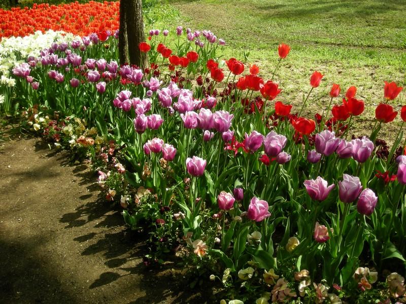 Messer tulipano 2009 10 anno al castello di pralormo for Giardini fioriti tutto l anno