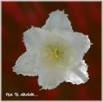 fiore-bianco-sfondo-soleggiato