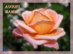 rosa-ortoflora-per-mamma