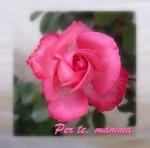 rosa-per-te
