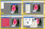 collage rosa incoll 1