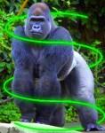 Gorilla beam 2