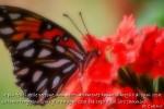 I_MG_0913 farfalla cn pensiero