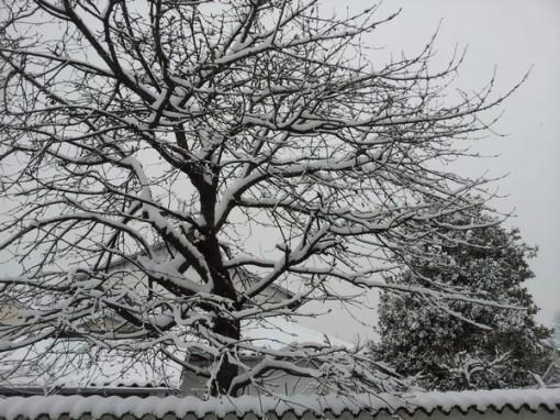 la neve 11-2-13 ridotta