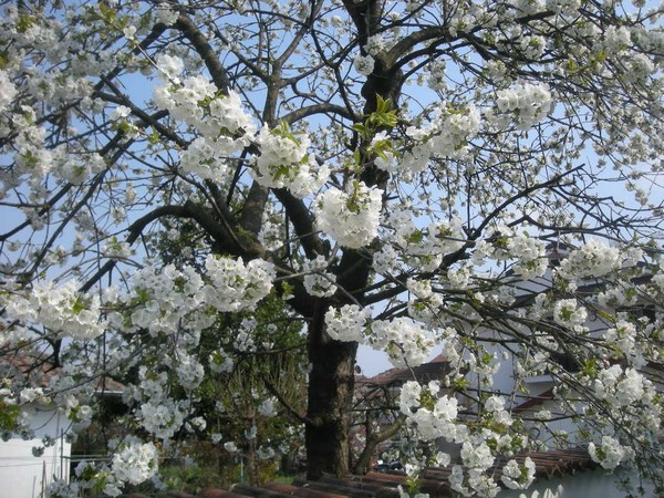 la primavera havenido ridotta