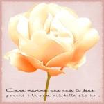 rosaclarapermamma