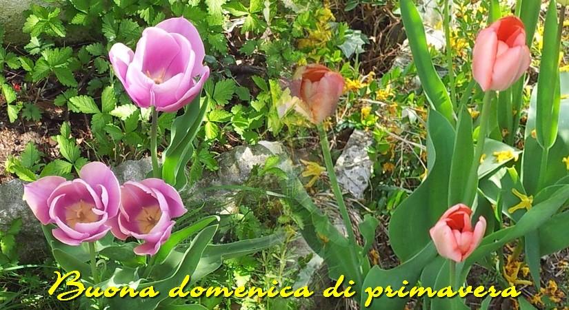 Eccezionale Buona domenica… dal mio giardino | BRICIOLE DI TUTTOUN PO'. IW14