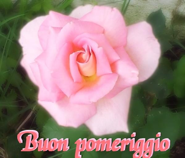 pomeriggio rosa
