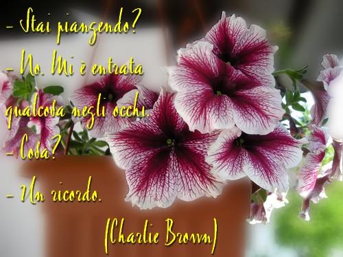 il ricordo di charliebrown 1