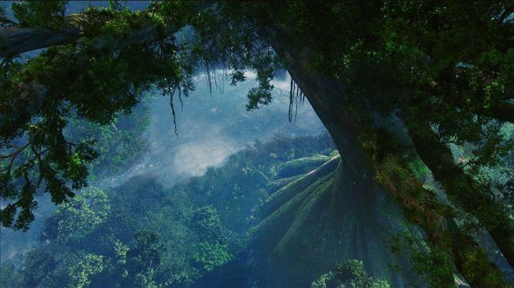 Avatar-Forest-Plants-Film