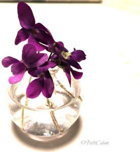 20150316_violette-21_