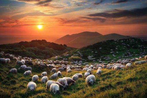 greggi-di-pecore-nel-mondo-05